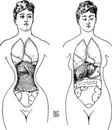 image of organs